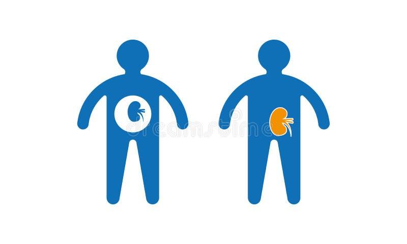 Vektor-Illustration der menschlichen Niere und des K?rpers lizenzfreie abbildung