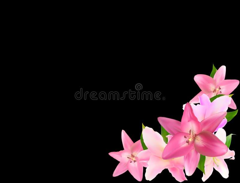 Vektor-Illustration mit rosa Lily Isolated auf schwarzem Hintergrund vektor abbildung