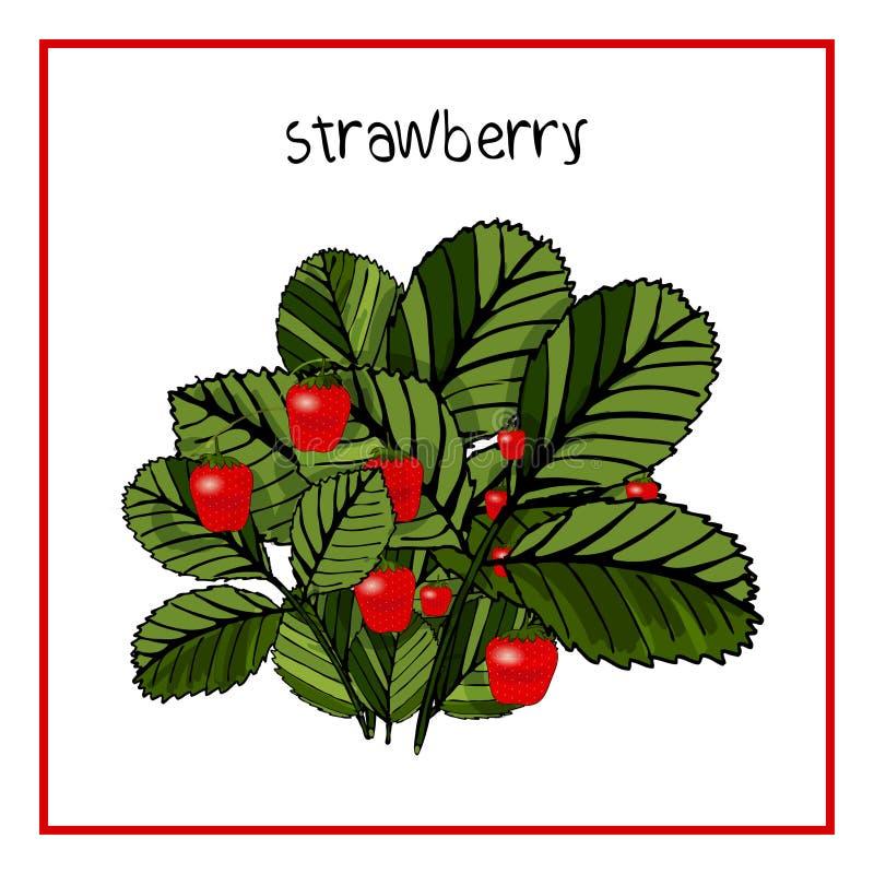 Vektor-Illustrations-Ikone der reifen Erdbeere mit Blättern lizenzfreie abbildung