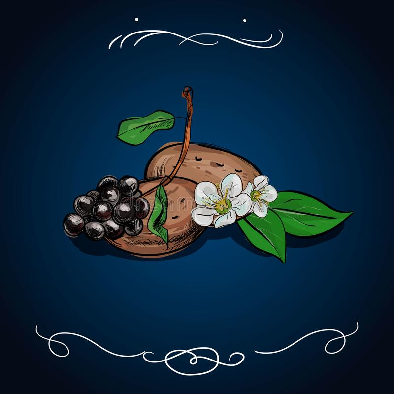 Vektor inristad stilillustration för affischer, garnering och tryck Den drog handen skissar av kakor med bär som isoleras på blåt royaltyfri illustrationer