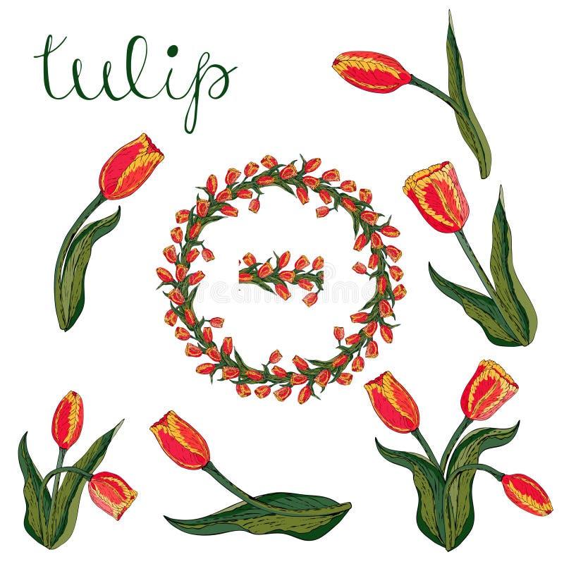 Vektor isolerad röd tulpan på vit stock illustrationer