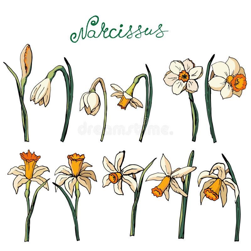 Vektor mit Blumen lizenzfreie abbildung