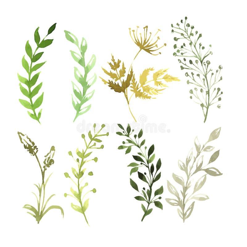 Vektor-Satz Blumen an gemalt im Aquarell lizenzfreie abbildung