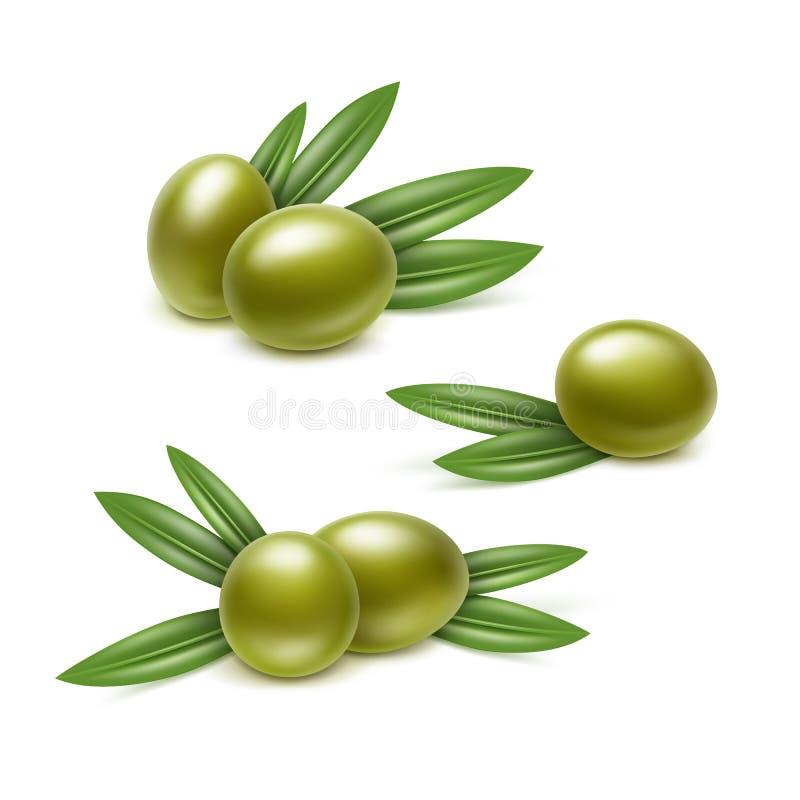 Vektor-Satz grüne Oliven-Niederlassungen mit den Blättern lokalisiert auf weißem Hintergrund lizenzfreie abbildung