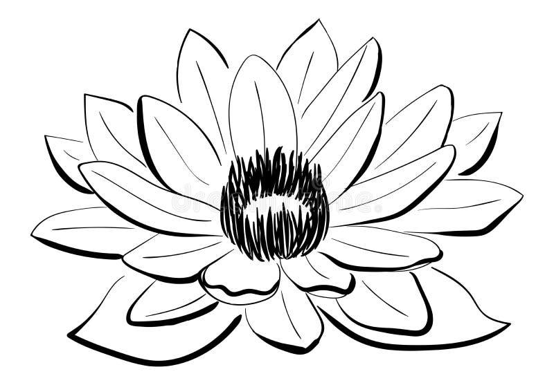 Vektor-Schwarzweiss--Lotus-Blume Vektor Abbildung - Illustration von ...