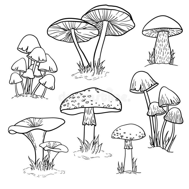 Vektor som är botanisk med champinjoner stock illustrationer