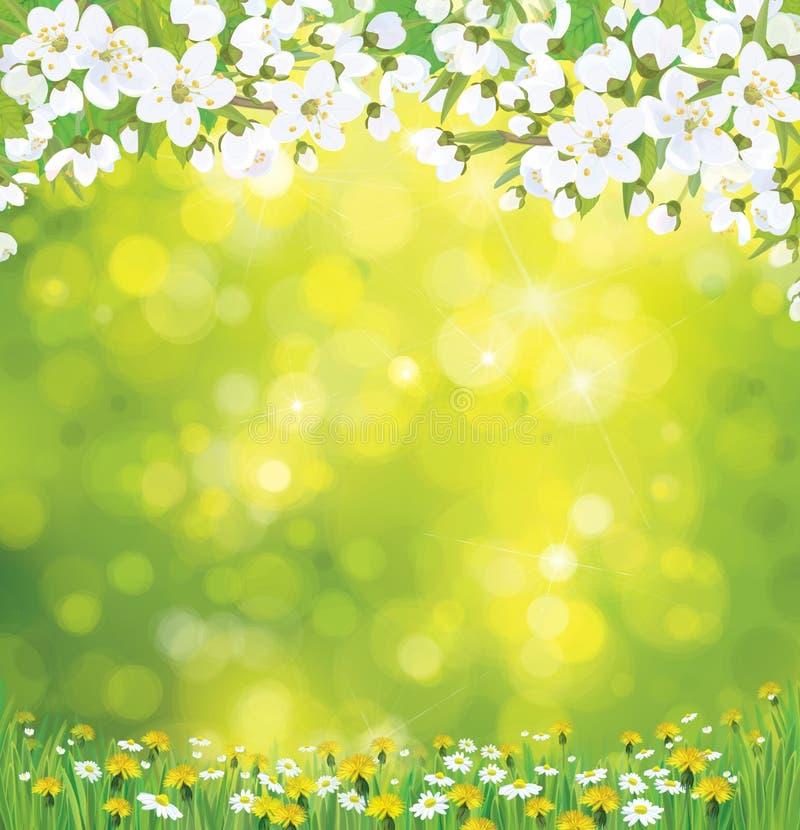 Vektor som blomstrar trädet på vårbakgrund. stock illustrationer