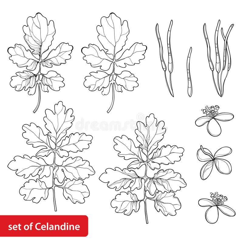 Vektor stellte mit der beständiger Blume Entwurf Celandine oder Chelidonium ein, Blatt und dem Samen im Schwarzen lokalisiert auf vektor abbildung