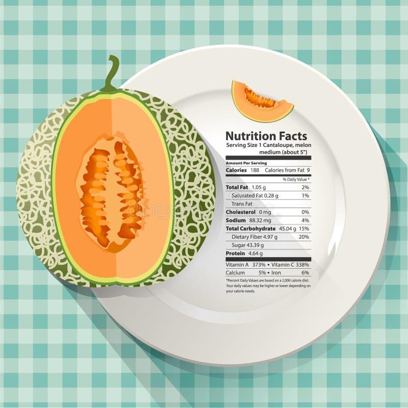 Vektor von Nahrungstatsachen in der Kantalupe stock abbildung