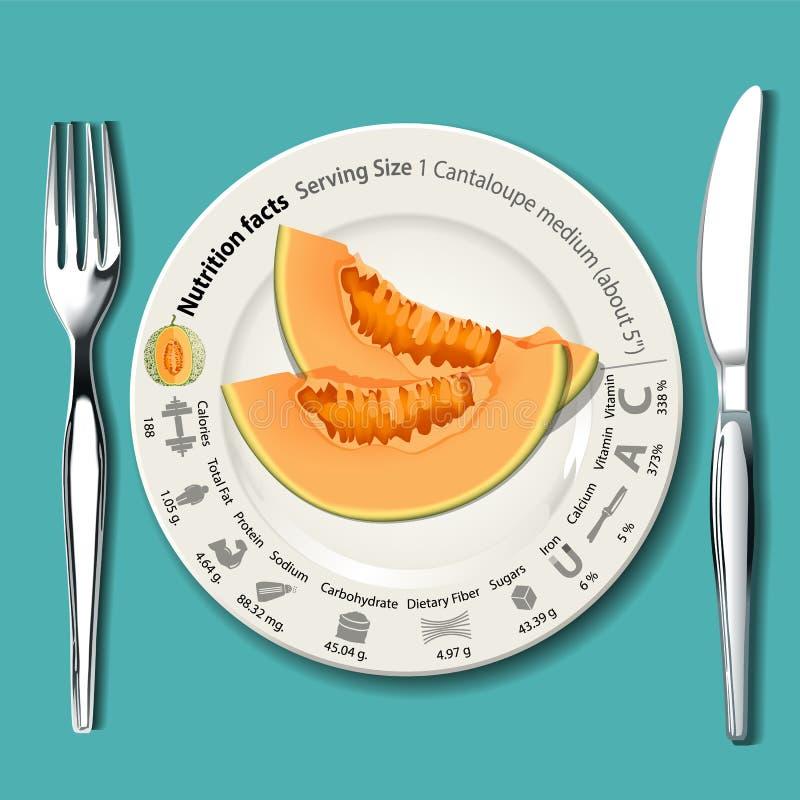 Vektor von Nahrungstatsachen in der Kantalupe vektor abbildung