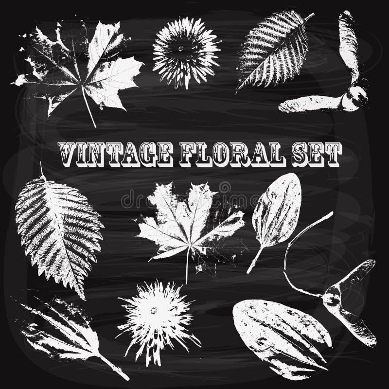 Vektor-Weinlese-Art-Florenelemente auf Tafel lizenzfreie abbildung