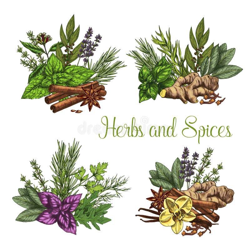 Vektoraffisch av krydda- och örtsmaktillsatser vektor illustrationer