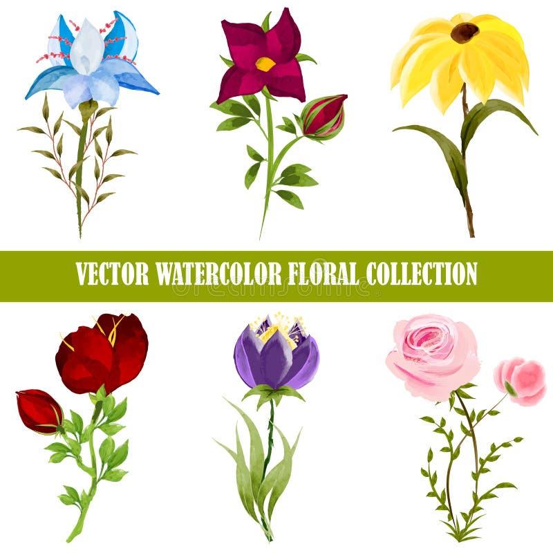 Vektoraquarell-Blumensammlung lizenzfreie abbildung