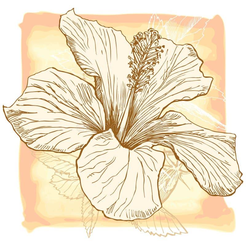 VektorAquarell Hibiscus vektor abbildung