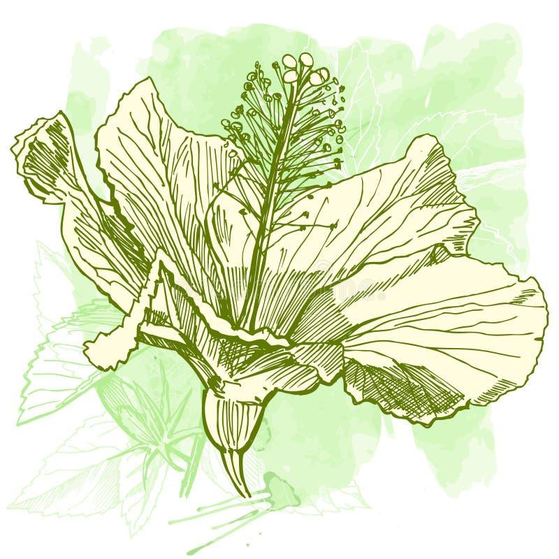 VektorAquarell Hibiscus stock abbildung