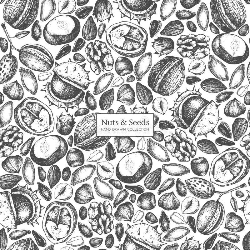 Vektorbakgrund med muttrar och frö för hand utdragna skissar Hasselnöten valnöt, sörjer mutter-, kastanj-, solros-, lin- och pimp vektor illustrationer