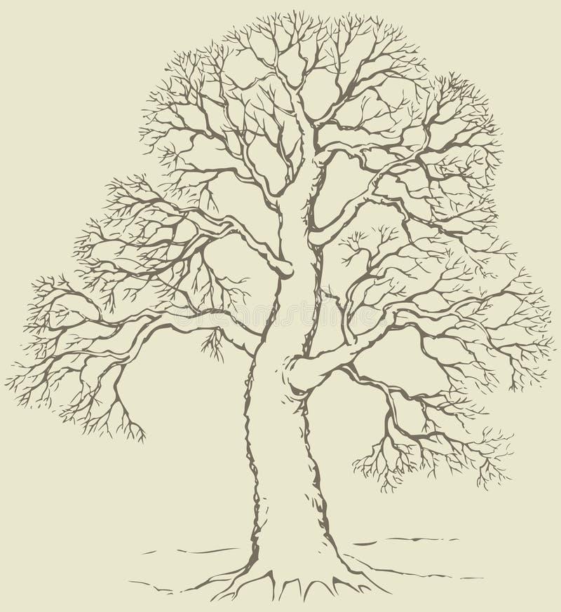 Vektorbild av det väldiga trädet med kala filialer stock illustrationer
