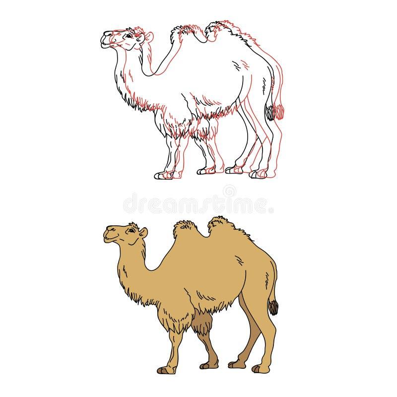 Vektorbild av en kamel royaltyfri illustrationer