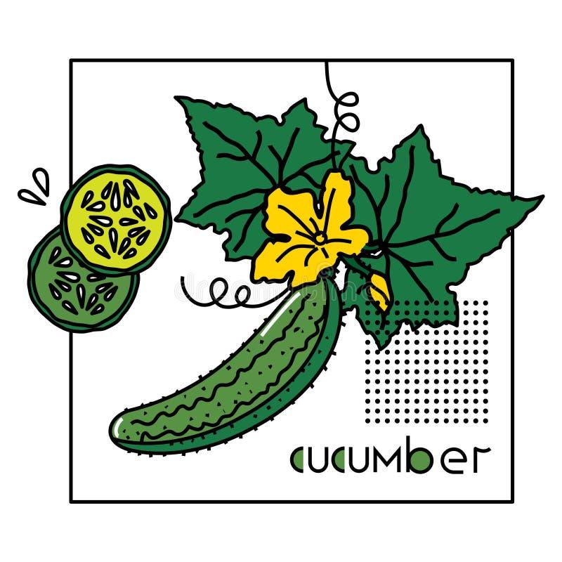 Vektorbild eines Gemüses mit der ursprünglichen Aufschriftgurke vektor abbildung