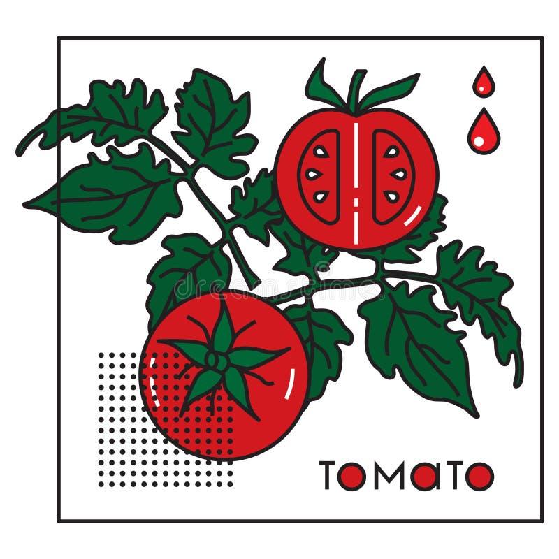 Vektorbild eines Gemüses mit der ursprünglichen Aufschrifttomate lizenzfreie abbildung