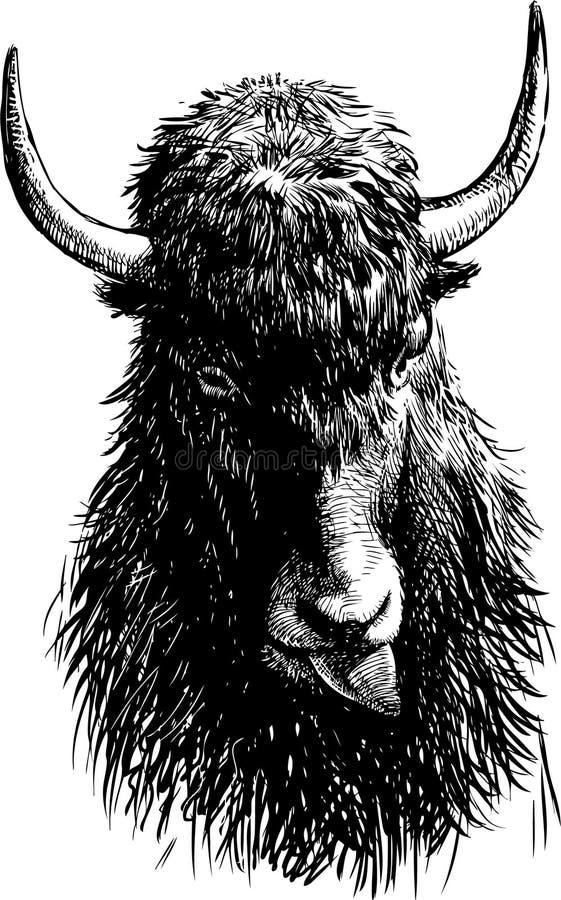 Stier-Kopf stock abbildung