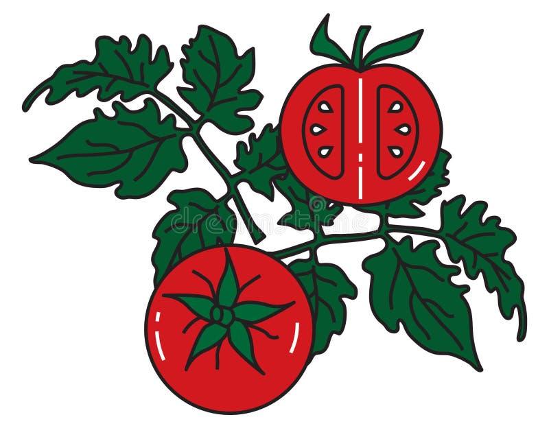 Vektorbild von Tomaten auf grünen Bush mit Blättern lizenzfreie abbildung