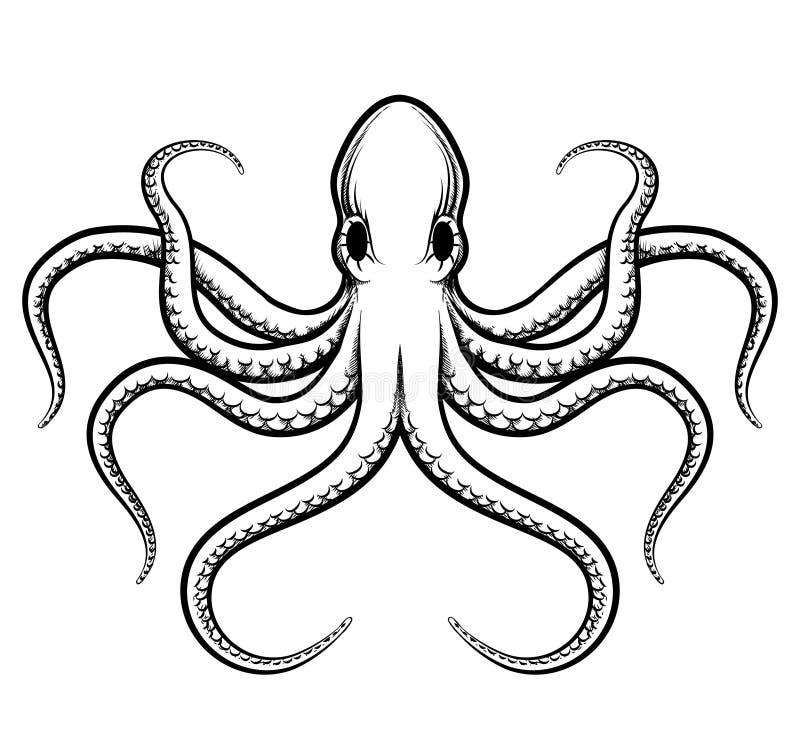 Vektorbläckfiskillustration stock illustrationer