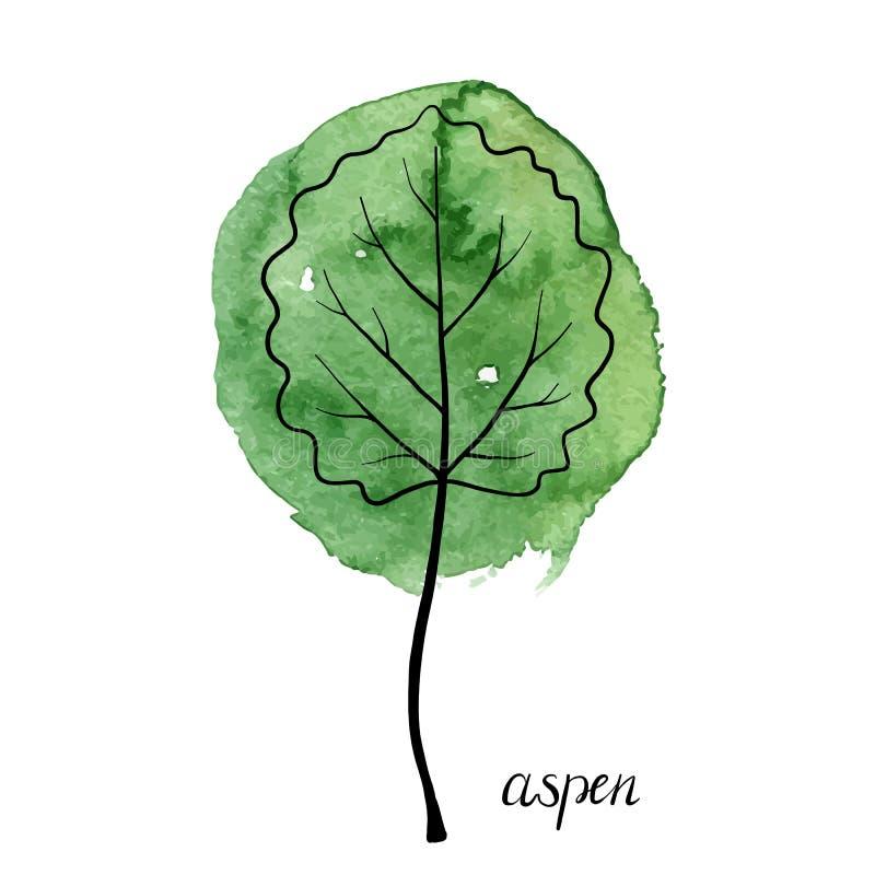 Vektorblad av det asp- trädet vektor illustrationer