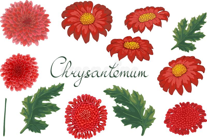 Vektorblumenillustration mit Chrysantheme lizenzfreie abbildung