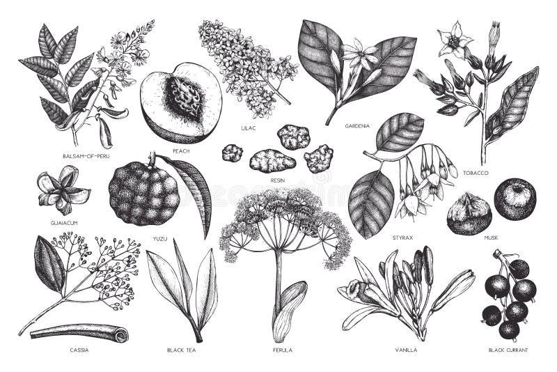 Vektorblumensammlung Weinlese-Handgezogene Parfümerie und Kosmetikbestandteilsatz Aromatisch und Heilpflanze stock abbildung