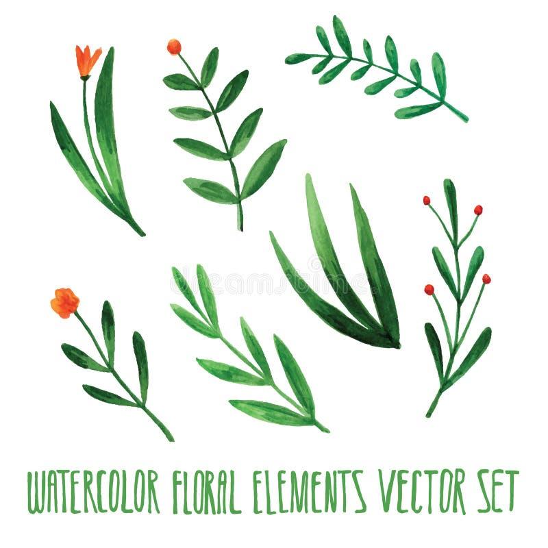 Download Vektorblumensatz Bunte Blumensammlung Mit Blättern, Zeichnendes  Aquarell Frühling Oder Sommerdesign Für Einladung, Hochzeit