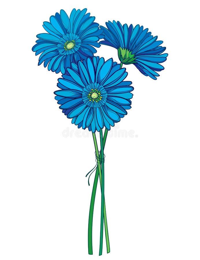 Vektorbukett av den gerbera- eller Gerber för översikt tre blomman i blått som isoleras på vit bakgrund Grupp av konturGerberablo vektor illustrationer