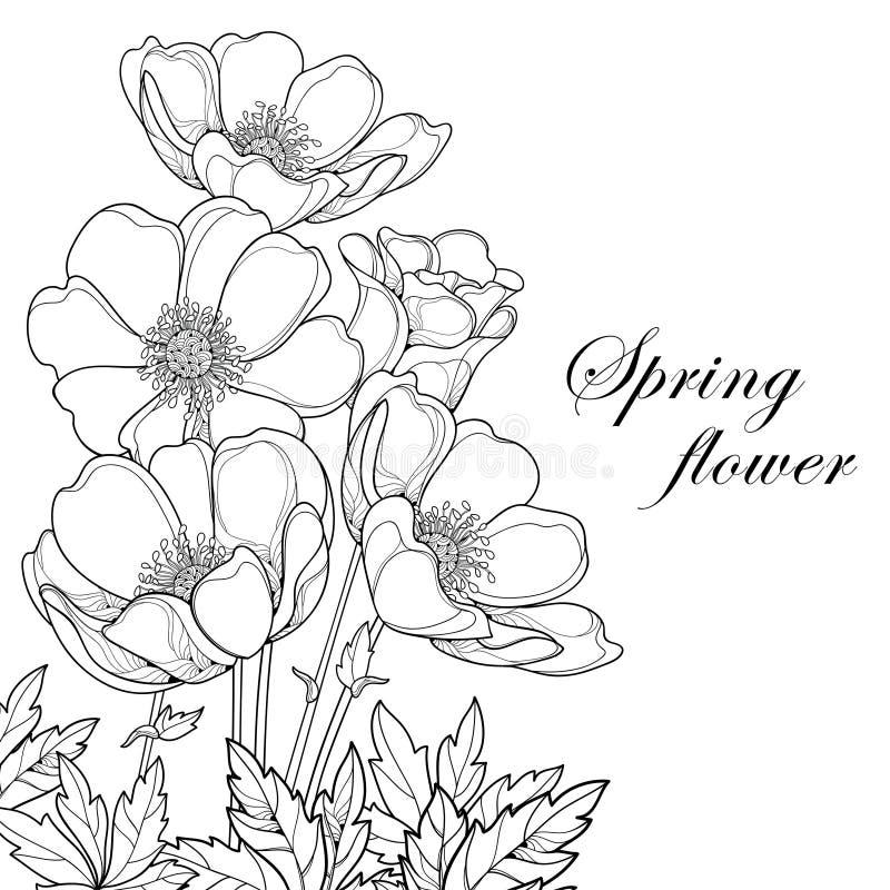 Vektorbukett med översiktsanemonblomman eller Windflower, knopp och sidor som isoleras på vit bakgrund Hörnsammansättning vektor illustrationer