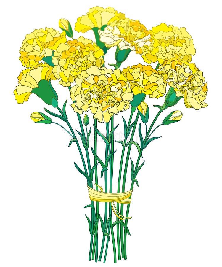 Vektorbukett med blomman för för översiktsgulingnejlika eller kryddnejlika, knoppen och gräsplanbladet som isoleras på vit bakgru royaltyfri illustrationer