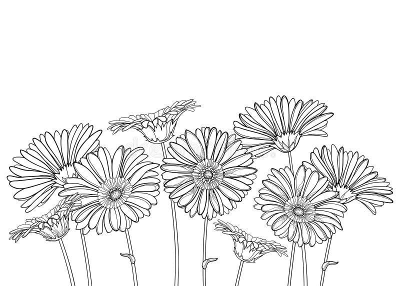 Vektorbukett med den översiktsgerbera- eller Gerber blomman och den utsmyckade knoppen i svart som isoleras på vit bakgrund royaltyfri illustrationer