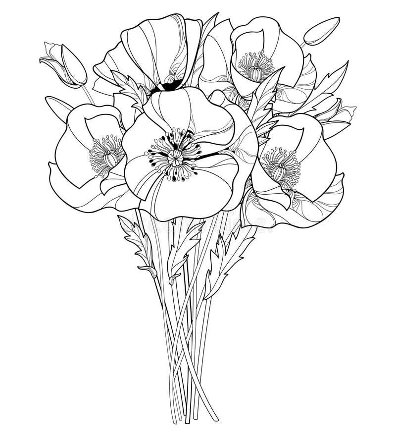 Vektorbukett med den översiktsvallmoblomman, knoppen och sidor i svart som isoleras på vit bakgrund Utsmyckade vallmo i kontursti royaltyfri illustrationer