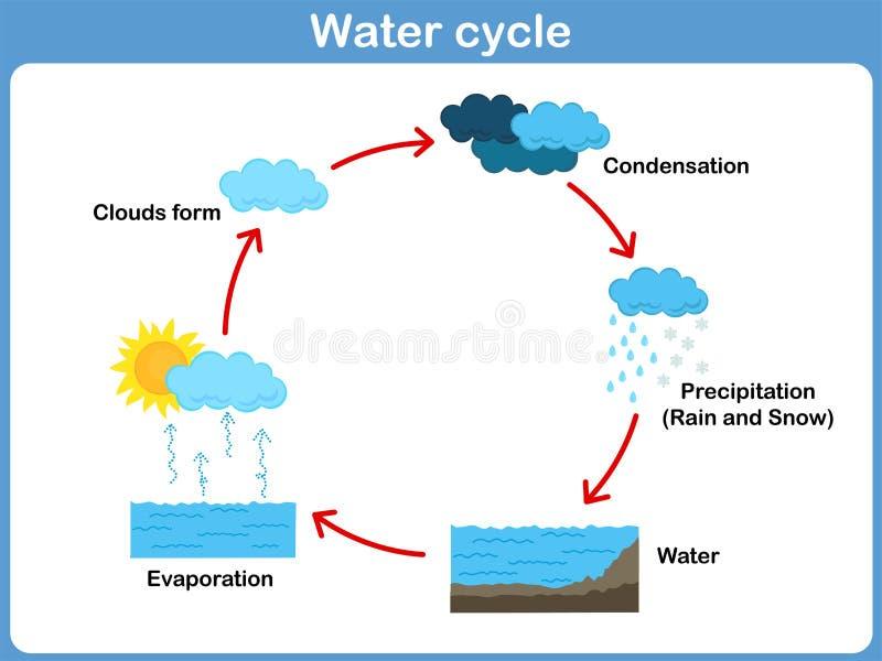Vektorcirkulering av vatten för ungar vektor illustrationer