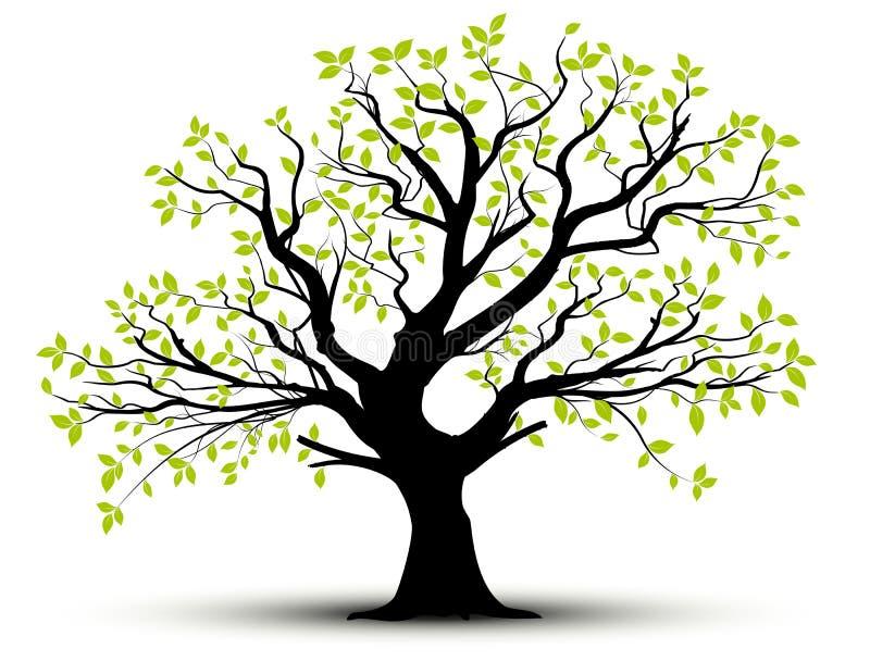 Vektordekorative Baum- und -GRÜNblätter vektor abbildung