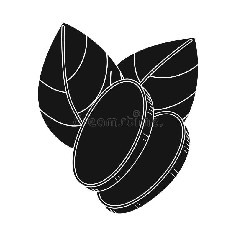 Vektordesign av ingefäran och att rota tecknet Samling av ingefära- och arommaterielsymbolet för rengöringsduk vektor illustrationer