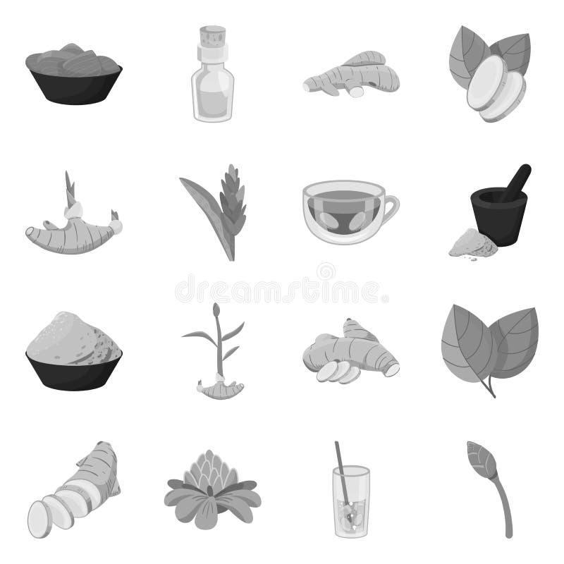 Vektordesign av krydda- och ingredienssymbolen Samling av krydda- och produktmaterielsymbolet för rengöringsduk stock illustrationer