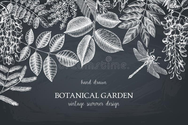 Vektordesignen med den utdragna filialen för handen, sidor, frö, kottar, frukter skissar Tappningram med botaniska beståndsdelar  royaltyfri illustrationer