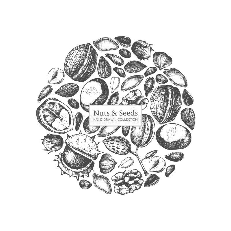 Vektordesignen med frö och muttrar för hand utdraget skissar Valnöten hasselnöten, mandeln, kastanj, sörjer muttern, solrosen, pu vektor illustrationer