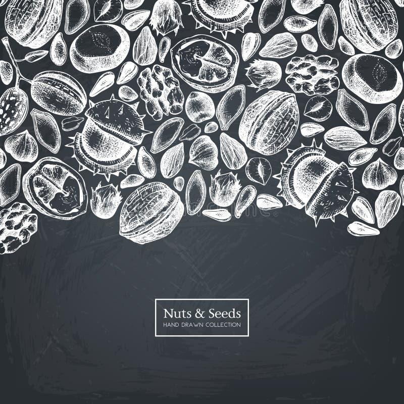 Vektordesignen med muttrar och frö för habd utdragna skissar Hasselnöten valnöt, sörjer mutter-, kastanj-, solros-, lin- och pimp royaltyfri illustrationer