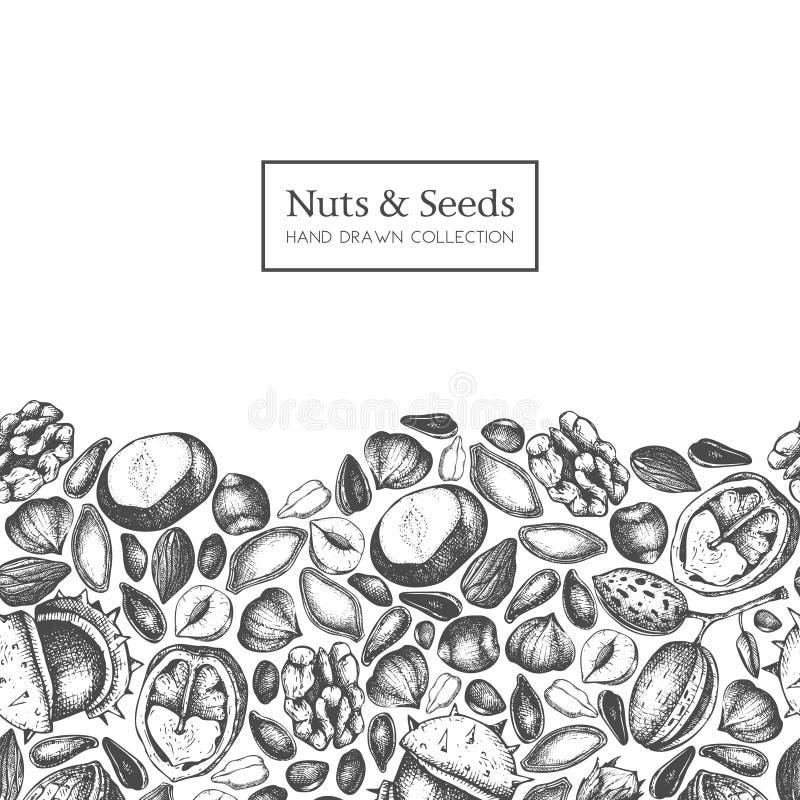 Vektordesignen med muttrar och frö för hand utdragna skissar Hasselnöten valnöt, sörjer mutter-, kastanj-, solros-, lin- och pimp royaltyfri illustrationer