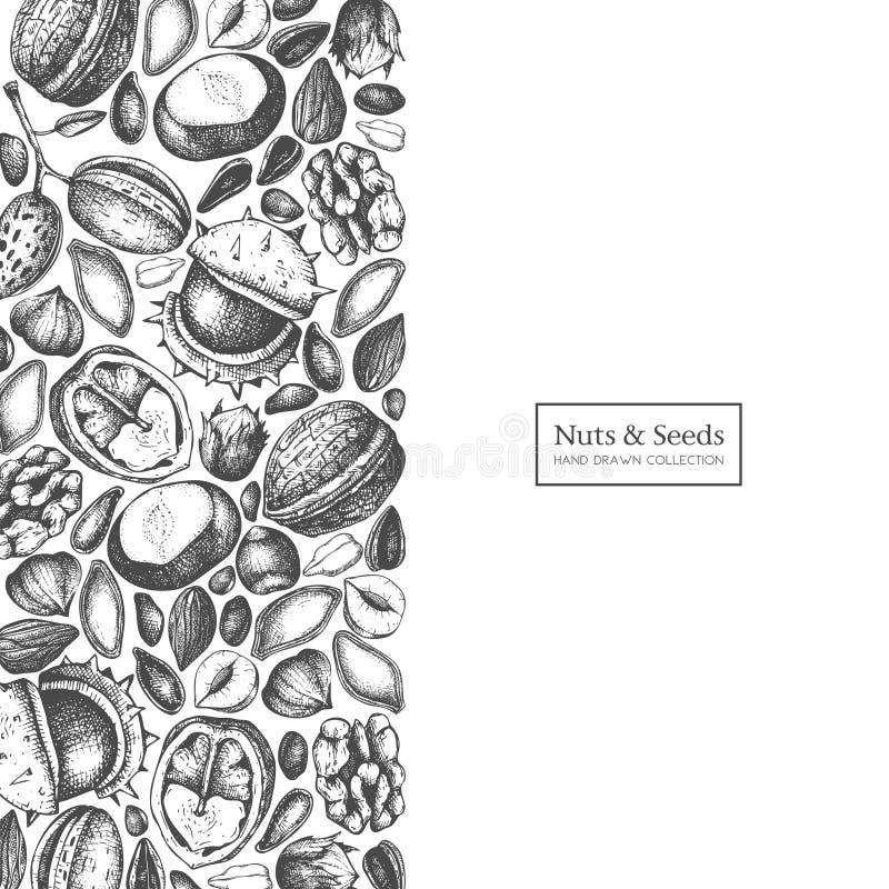 Vektordesignen med muttrar och frö för hand utdragna skissar Hasselnöten valnöt, sörjer mutter-, kastanj-, solros-, lin- och pimp stock illustrationer