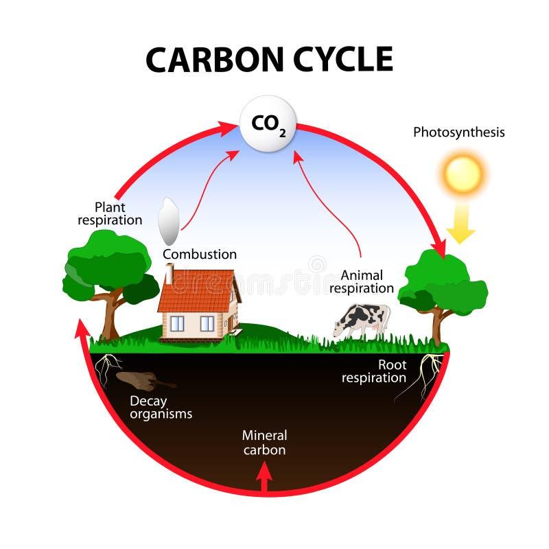 Vektordiagramm zeigt die Bewegung des Kohlenstoffs zwischen Land, Atmosphäre und Ozeanen lizenzfreie abbildung