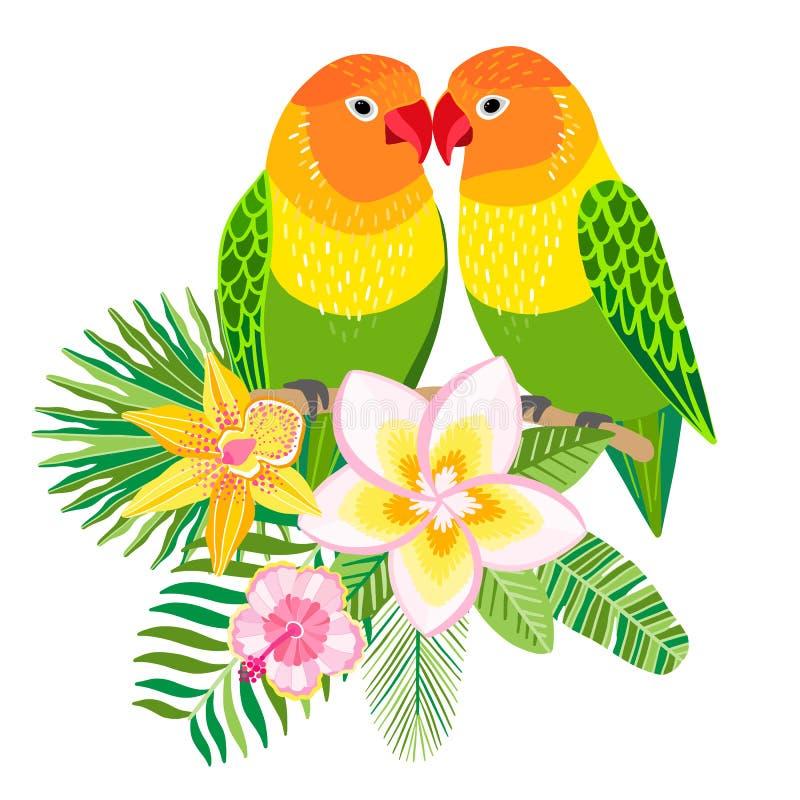 Vektordvärgpapegojapapegojor tropisk fågelillustration vektor illustrationer