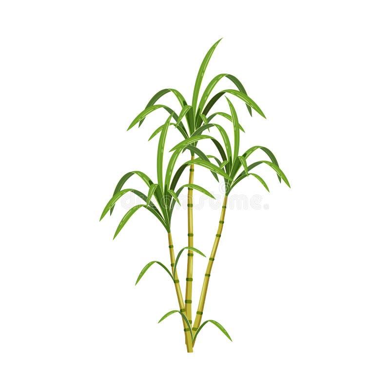Vektorentwurf des Zuckerrohr- und Stockzeichens Sammlung der Zuckerrohr- und Feldvorratvektorillustration lizenzfreie abbildung
