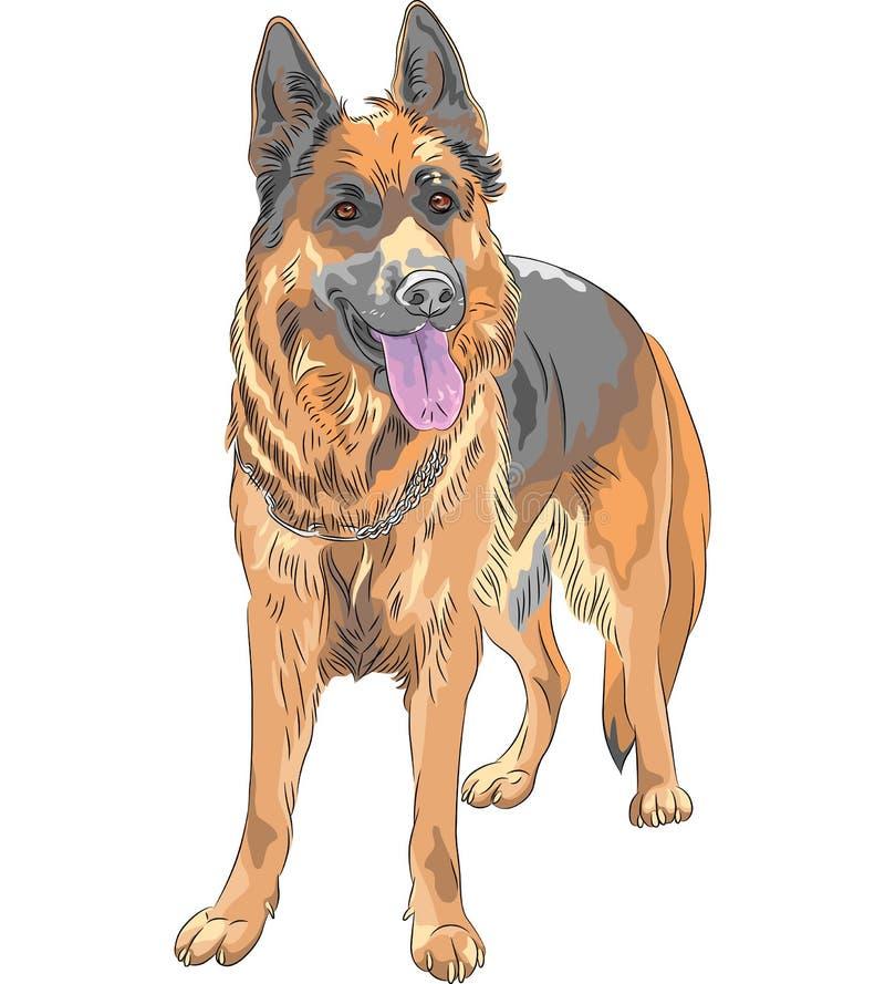 Vektorfärg skissar aveln för den tyska herden för hunden vektor illustrationer