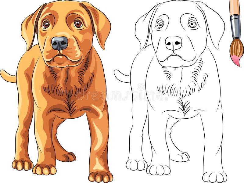 Vektorfärgläggningen bokar av röd valp förföljer Labrador retur royaltyfri illustrationer